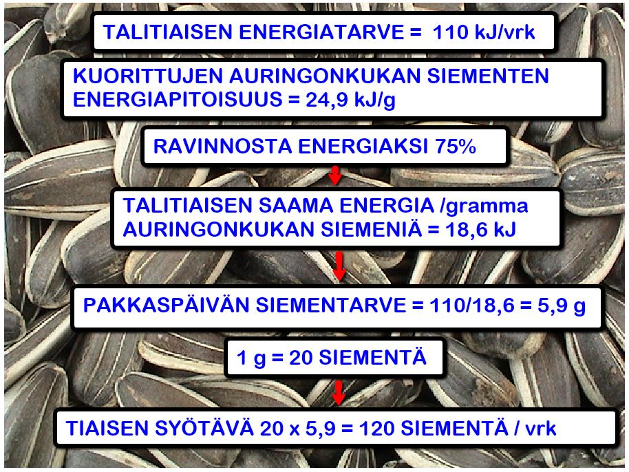 wpoma_linnut_talitiainen_02
