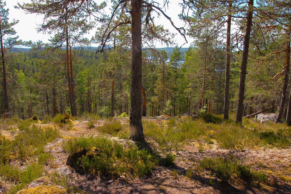 kansallispuistot_kolovesi_Nahkiaissalo 10.6.2013_02