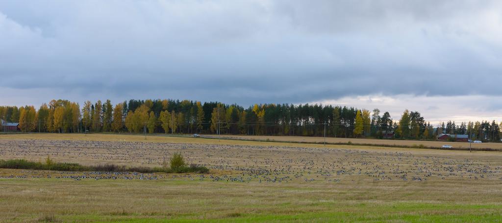 syysarktikaa_Savonlinna; Niittylahti 5.10.2017 -1