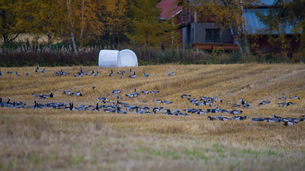 syysarktikaa_Savonlinna; Niittylahti 5.10.2017 -12