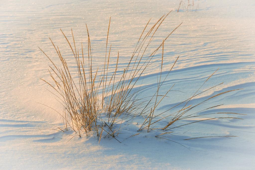 lumesta_Oulu; Nallikari 14.1.2012 -2