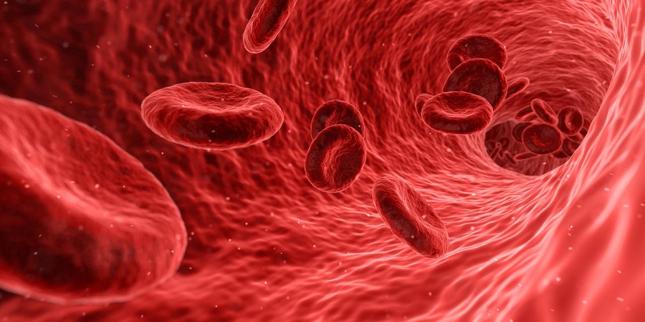Veri ja verisuonet