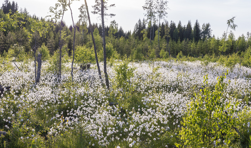 retki_180531_Savonlinnan seutu 31.5.2018_7