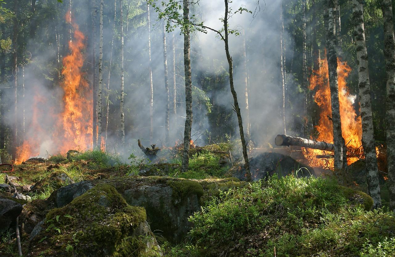 Kuumuus, kuivuus ja tulipalot