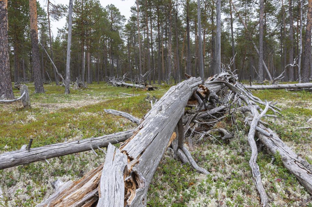 Matka Suomen Ja Norjan Lappiin