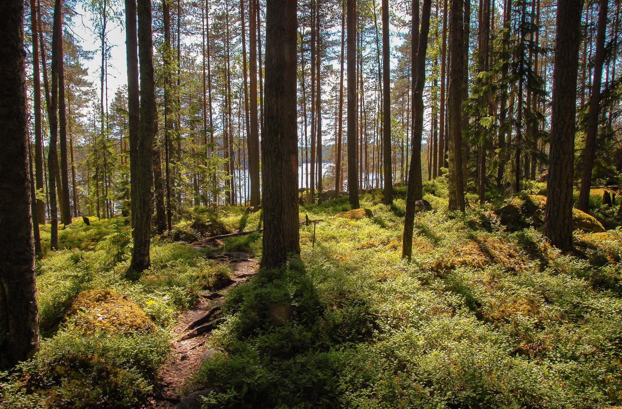 Metsäretkiä