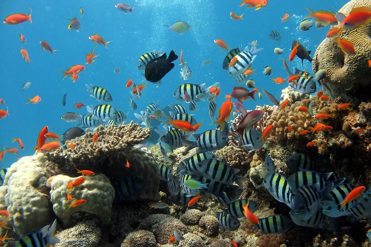 Maapallon meret ja niiden tila