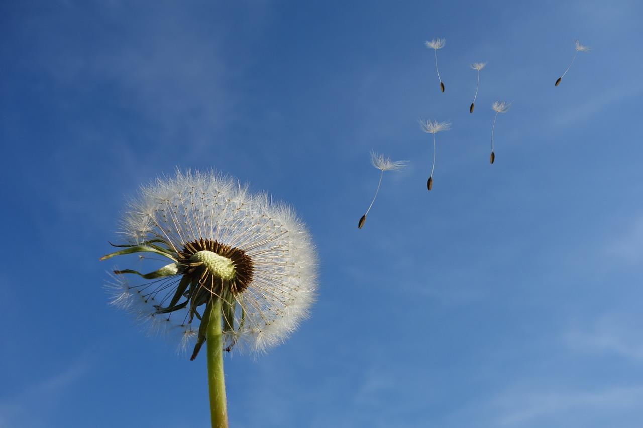 Miten tuuli syntyy