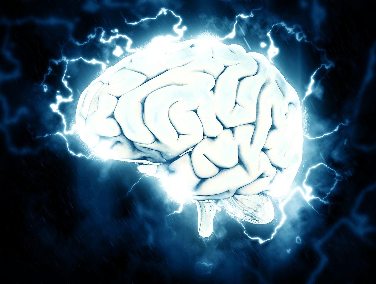 Aivot ja keskushermosto