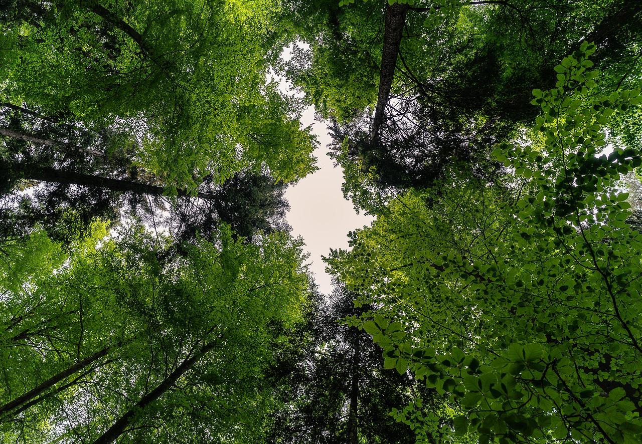 Maapallon metsät ja metsätalous