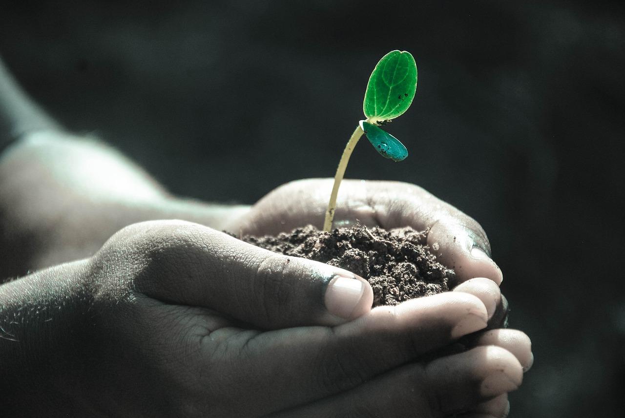 Kasvillisuus ja maannos