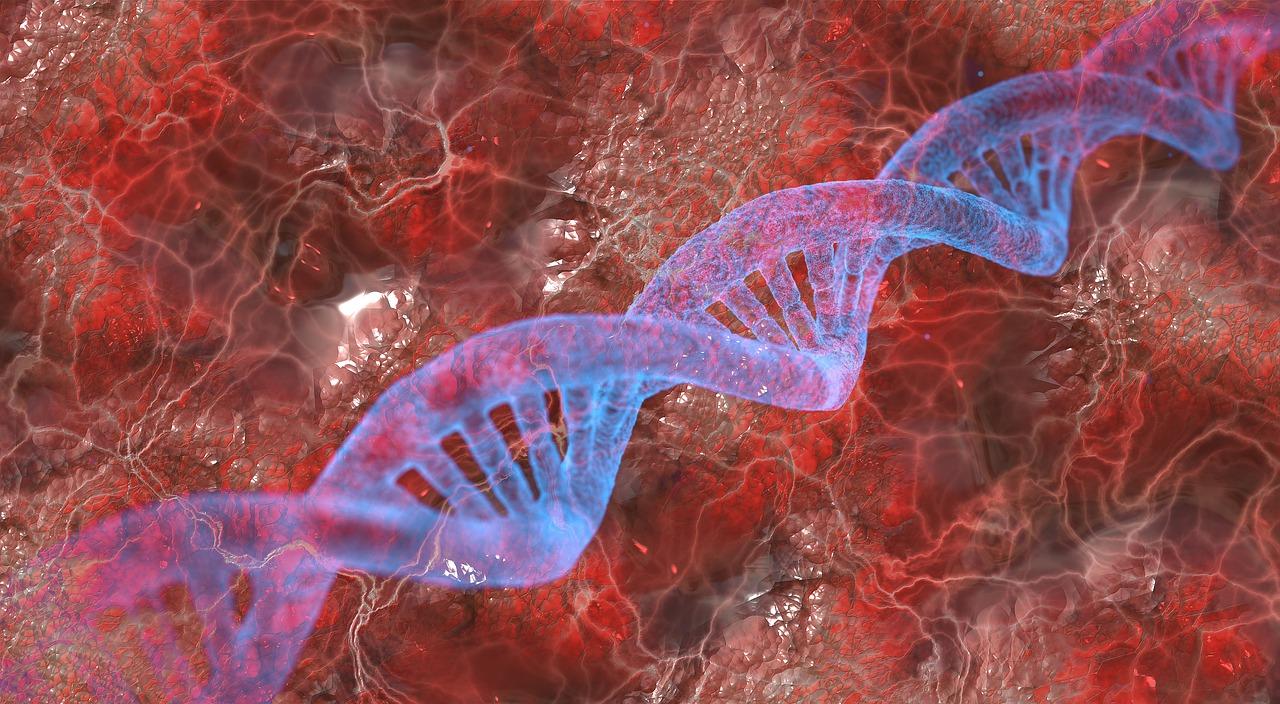 DNA eli deoksiribonukleiinihappo