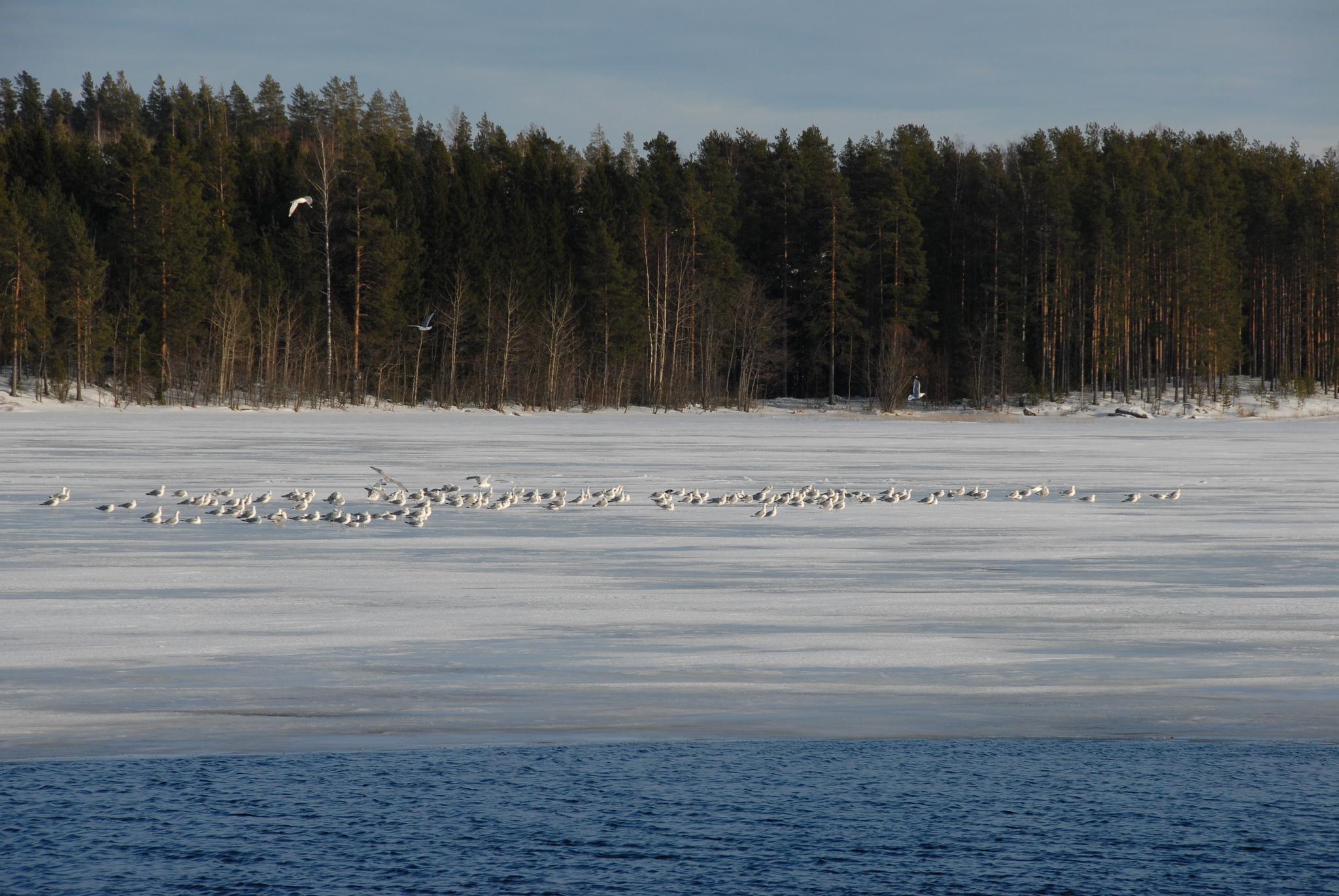 Kuopio Puutossalmi 18.3.2012