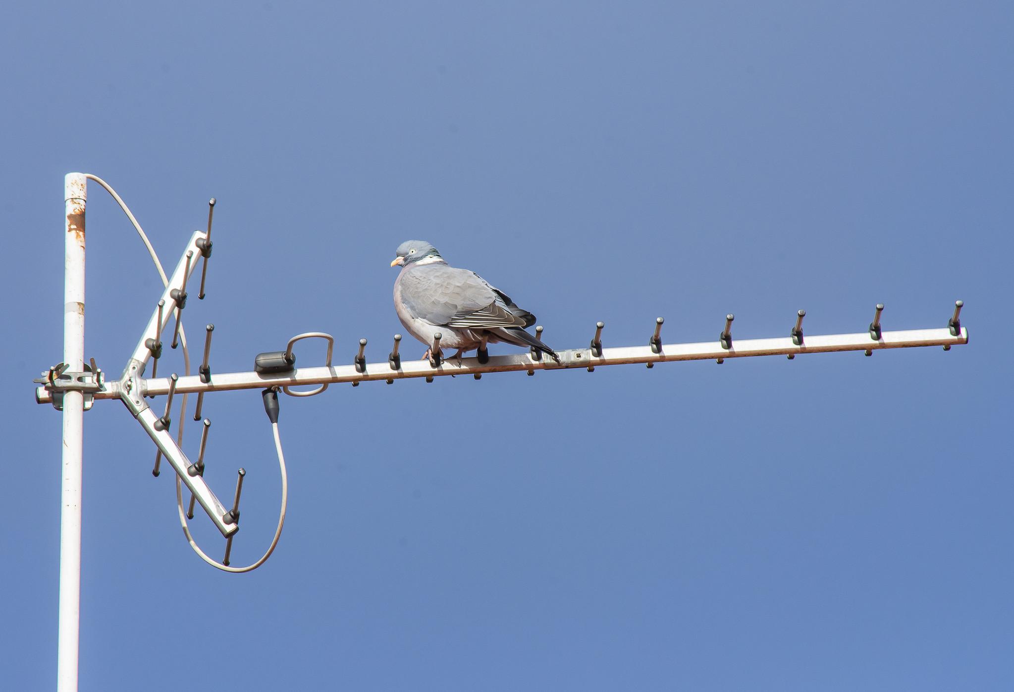 Muistipeli linnuista – 2