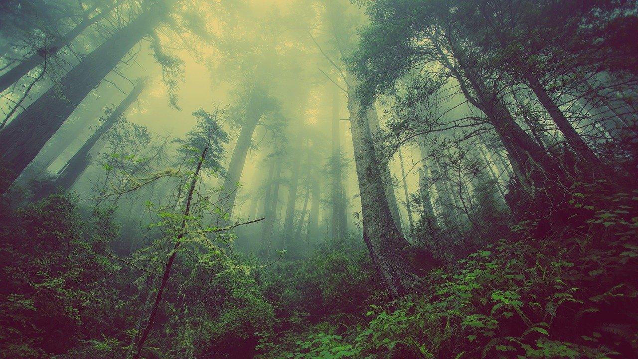 Maapallon biomit ja ekosysteemit