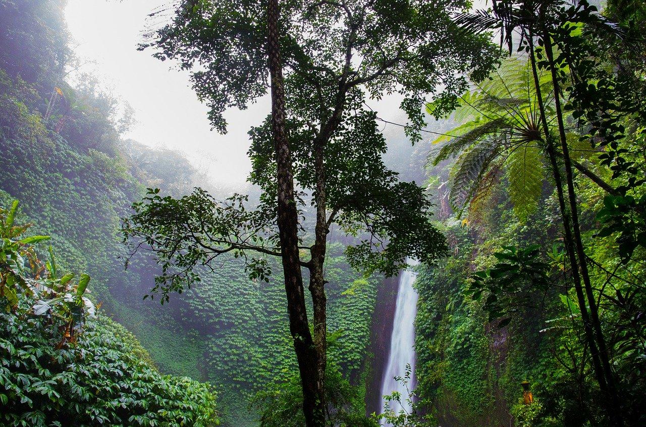Amazonin sademetsät