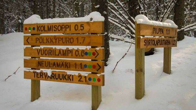 Kuopio: metsäretki