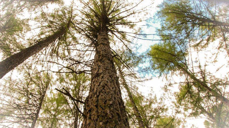 Punkaharjun Kokonharjulla ja puulajipuistossa