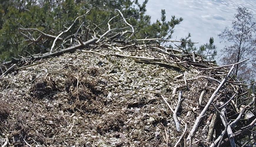 Pohjois-Savon sääksikamera