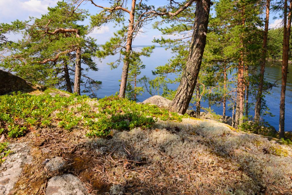 Haukivesi; Iso-Tuunas 26.7.2016 -5