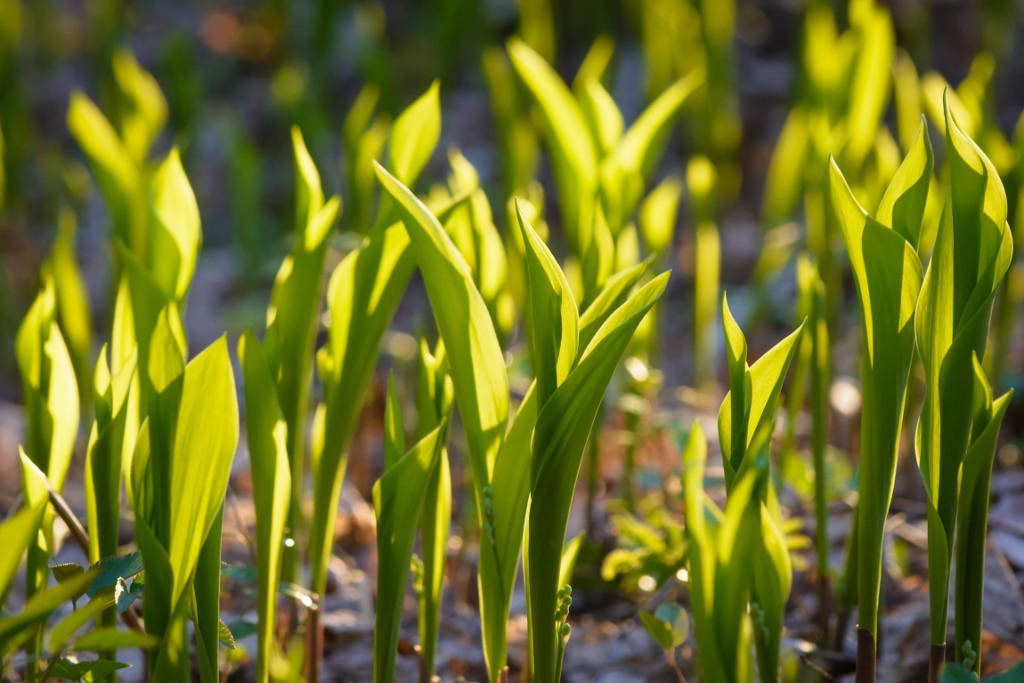 Vihreää liikettä kielokamerassa ja muuta kasvun seurantaa