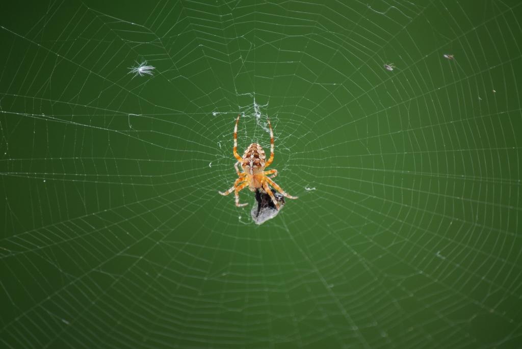 Hämähäkkijuttu