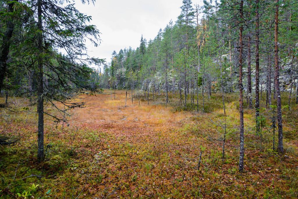 kansallispuistot_hiidenportin-kansallispuisto-24-9-2016-33
