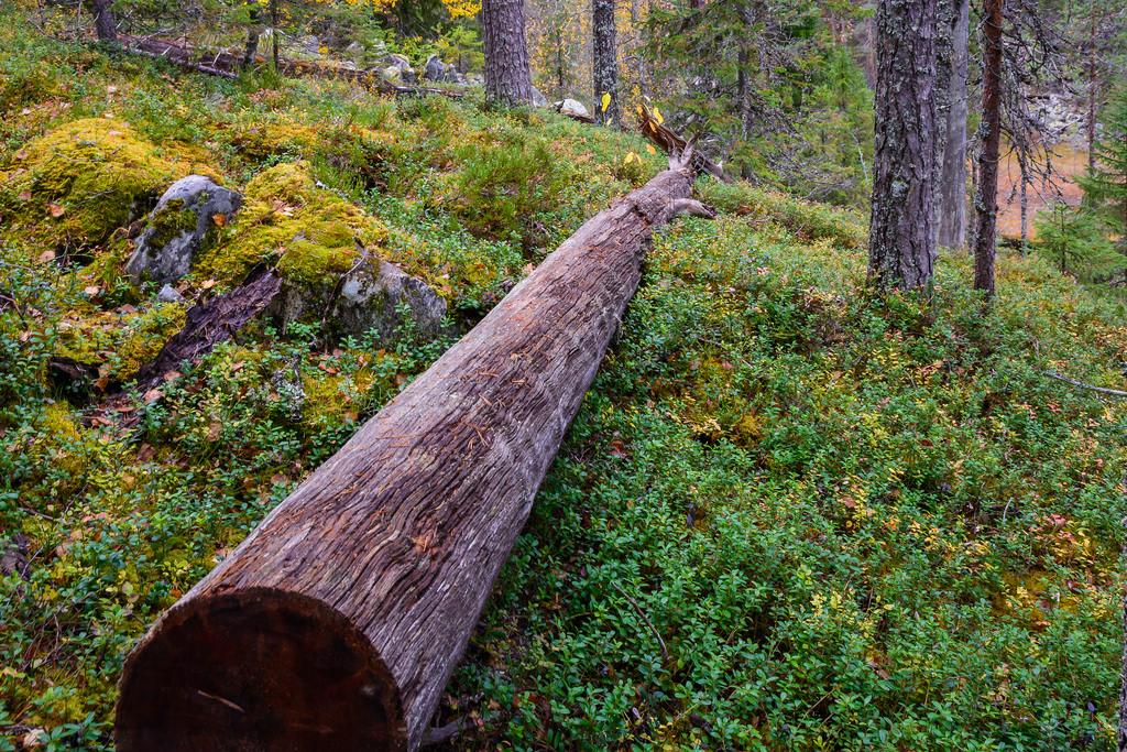 kansallispuistot_hiidenportin-kansallispuisto-24-9-2016-46