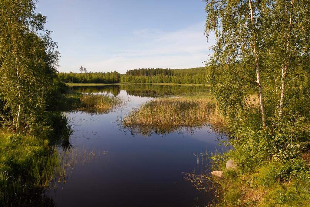 lintuharrastus_Kuopio; Ritisenlahti 30.6.2009