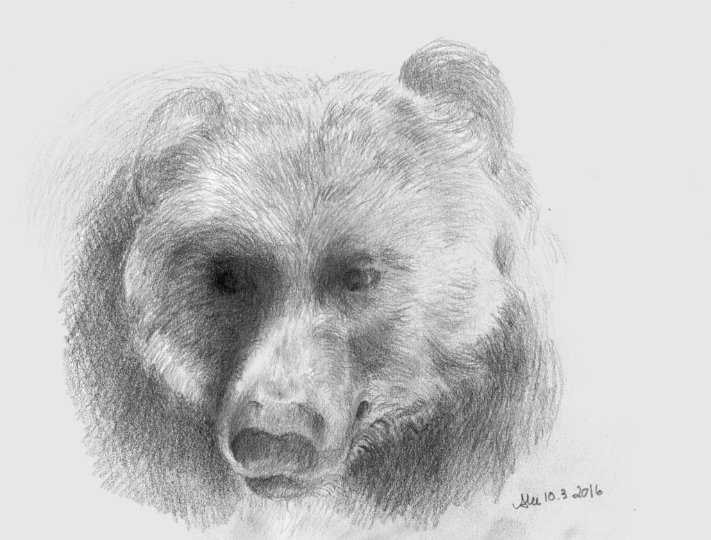 Karhu (kuomus)