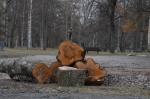 wpoma_kuopio_vainolaniemi_puut_02