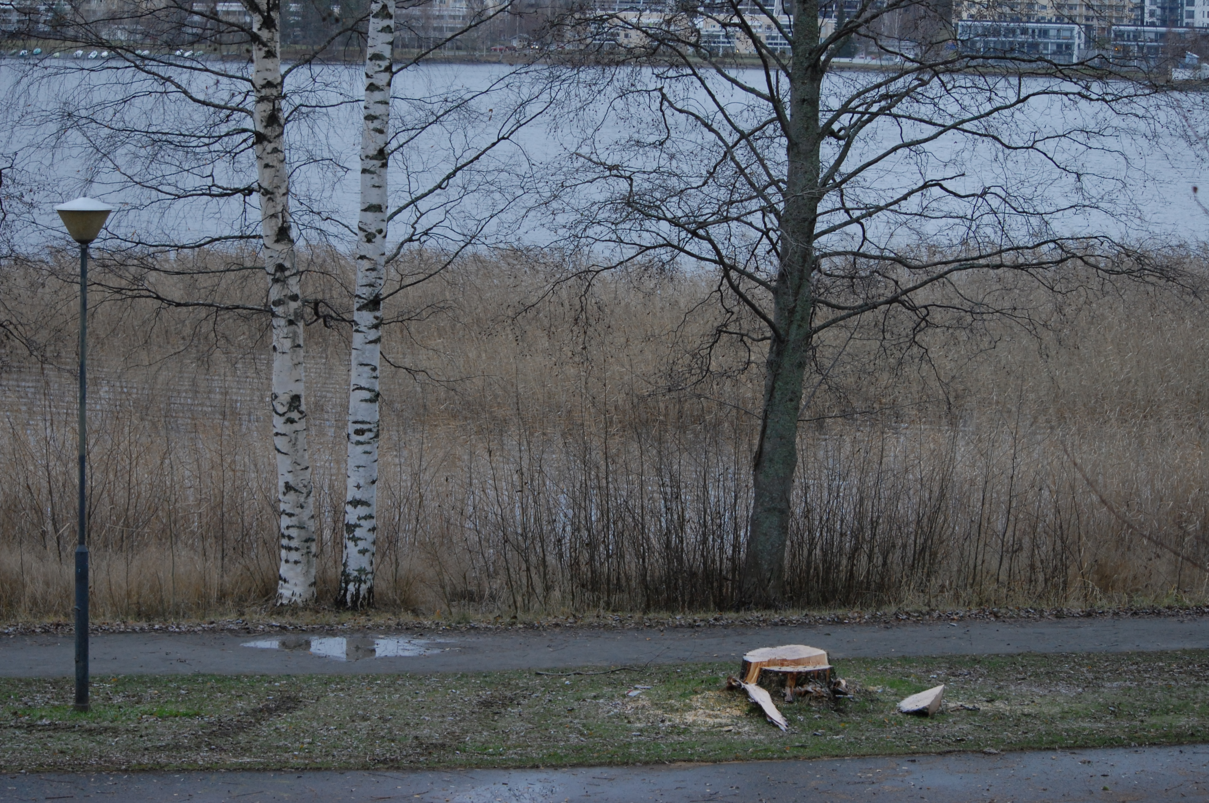 wpoma_kuopio_vainolaniemi_puut_03